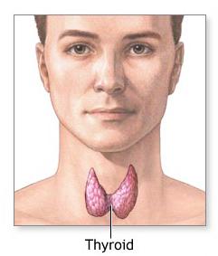 a7.medical.thyroid.illo.story