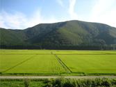 a5.tpp.trump.rice.japan.home