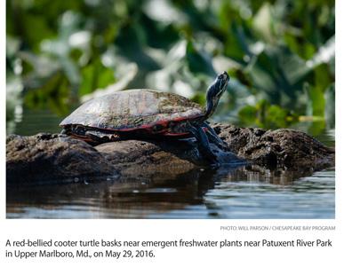 a7.waterways.turtle.story
